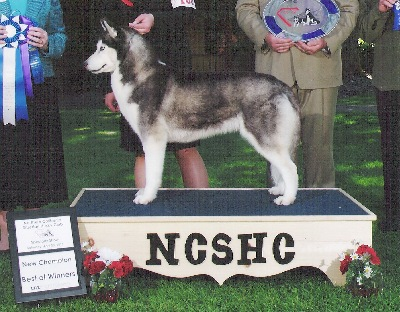 NEW CH!! 5 pt mjr going BOW at the NCSHC show.  Thanks to Dave Craig for your help handling in the breed ring!